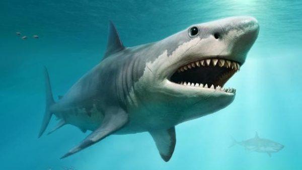 ทำความรู้จักฉลามให้มากขึ้น