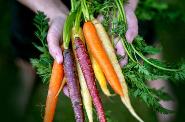 ประโยชน์ของแครอท